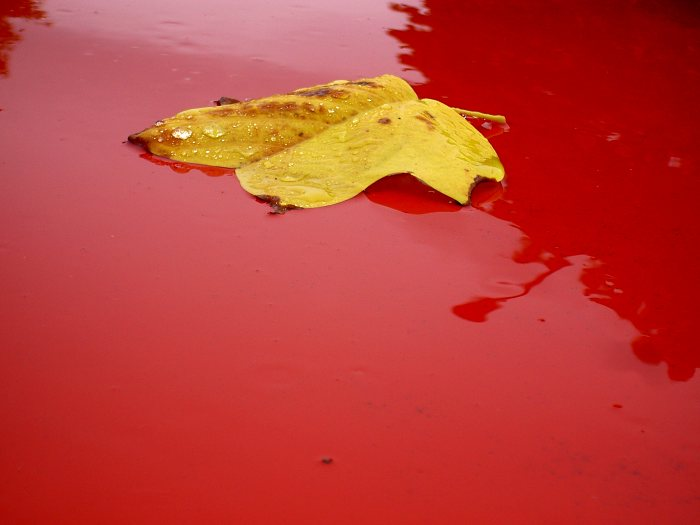 a yellow leaf on a red car