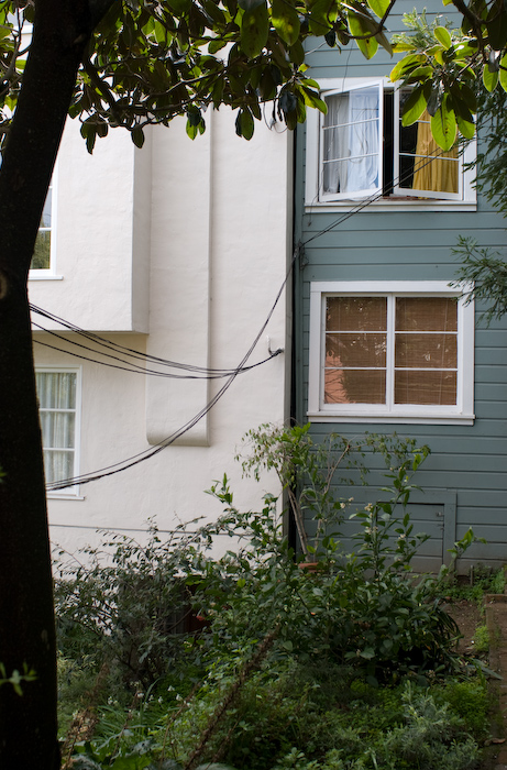 wires past a tree to a pair of houses