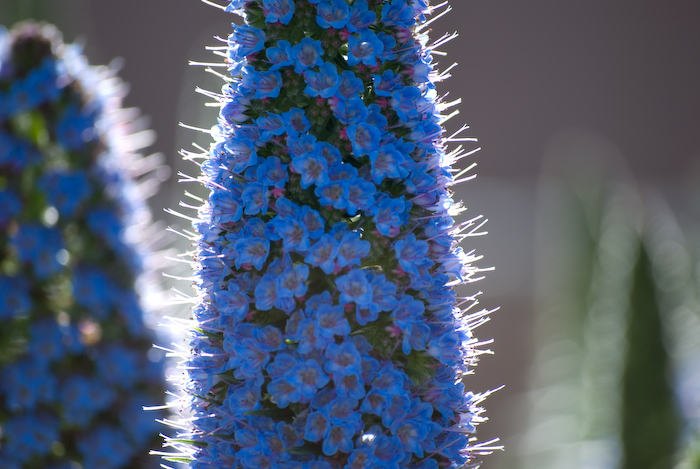 blue flowers in shallow depth of field