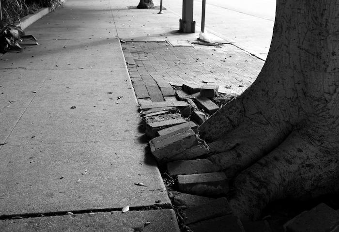 tree in sidewalk under bricks, lit from behind