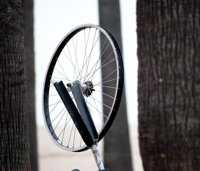 bike wheel between palm tree trunks