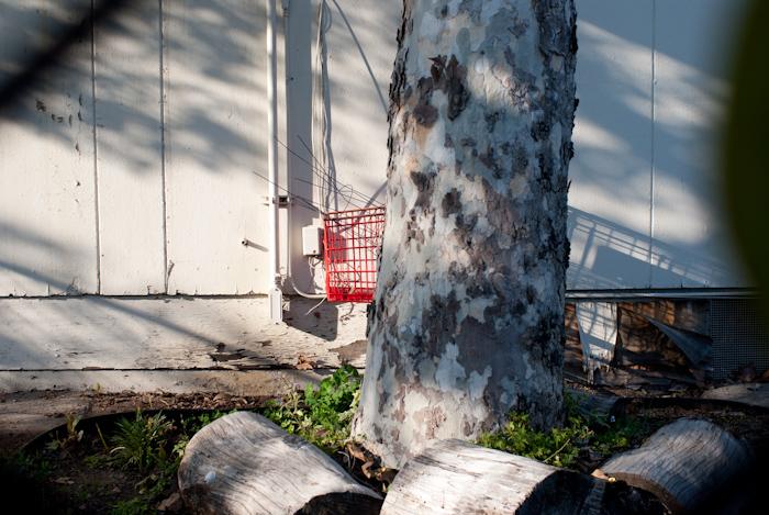 shopping cart behind tree in schoolyard