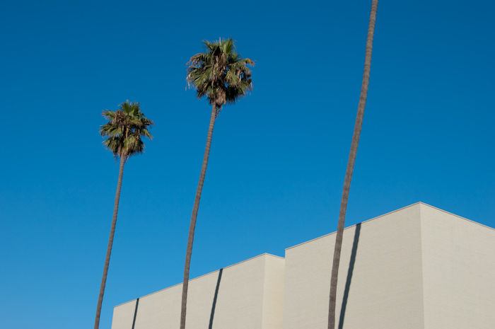palm trees with building facade