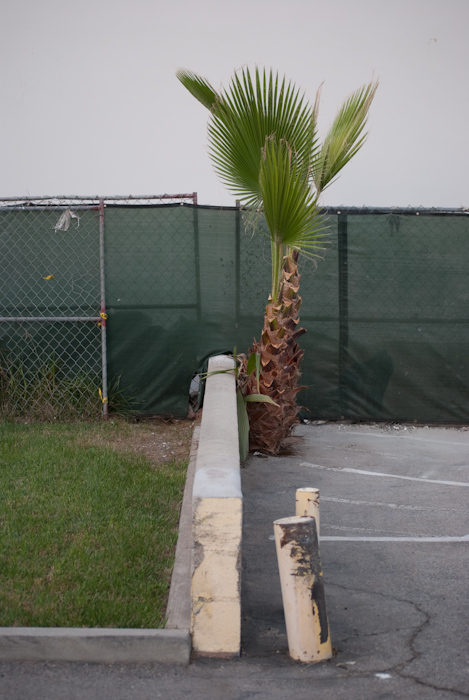 palm tree and construction fence next to wall