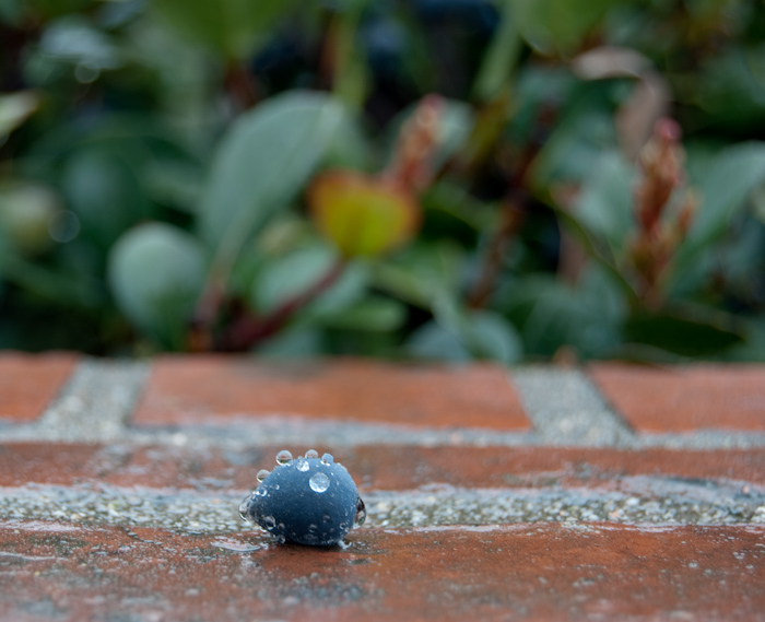 blueberry with water droplets on brick