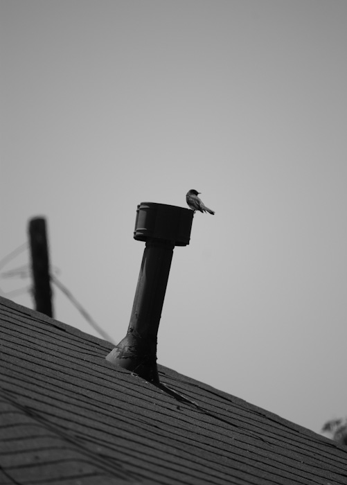 bird on chimmeney with rooftop