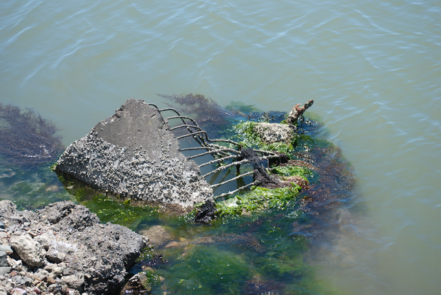 concrete block and rebar in water with vegetation