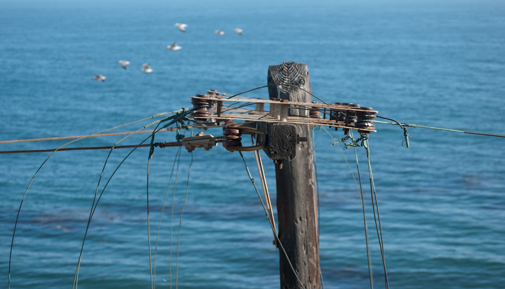 utility pole with wires and birds