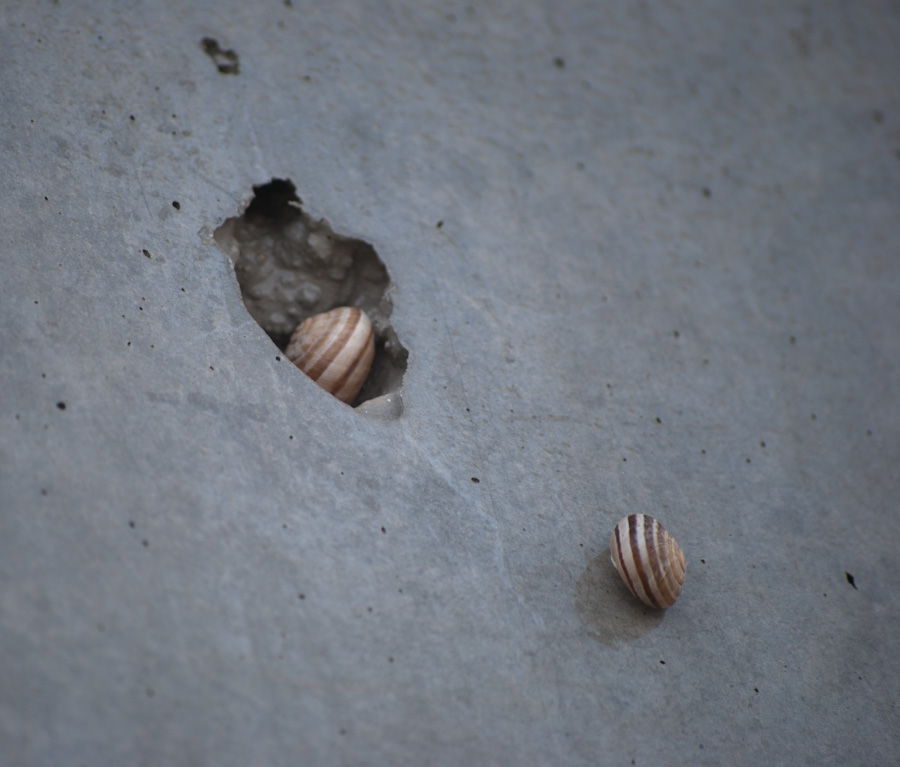snails in and beside concrete bubble