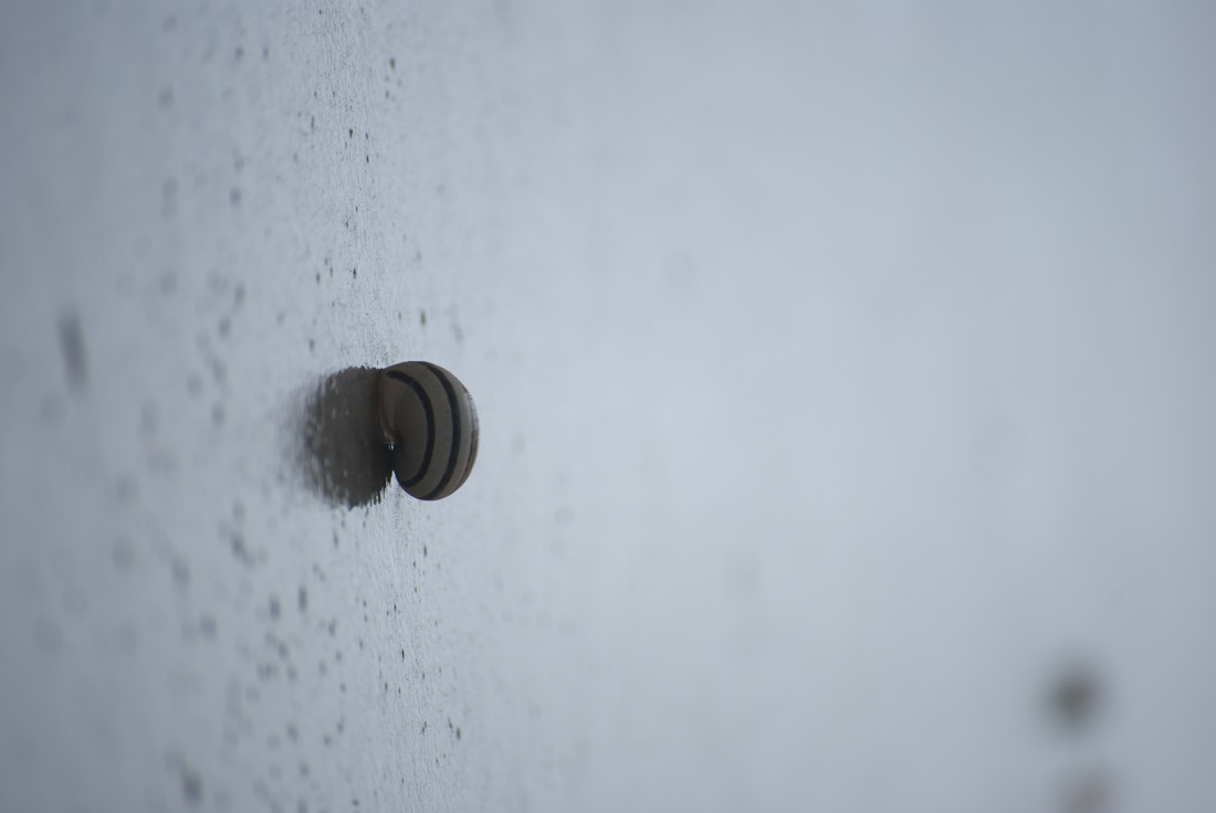 snail on reflecting concrete wall