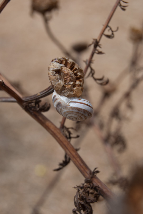 snail on dry plant