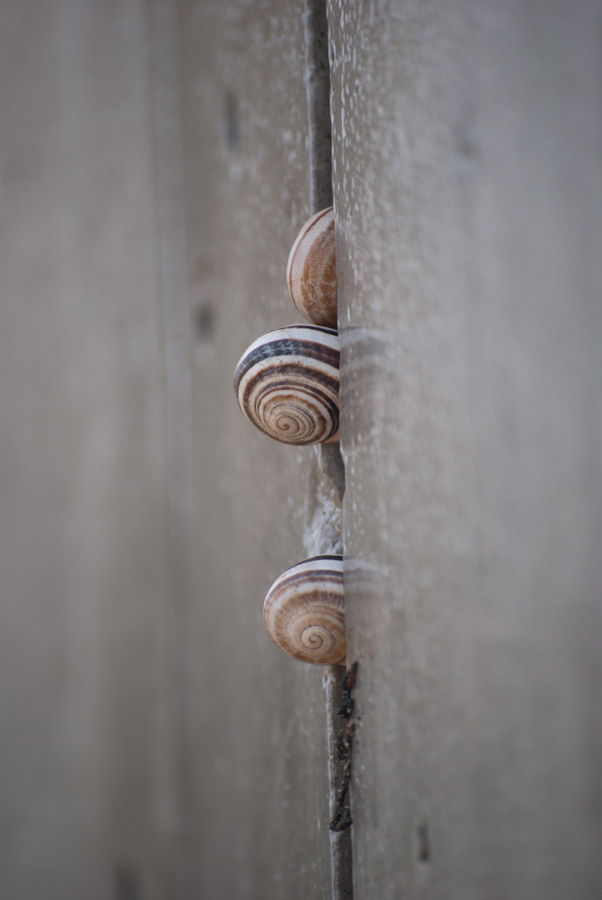 snails on concrete channel