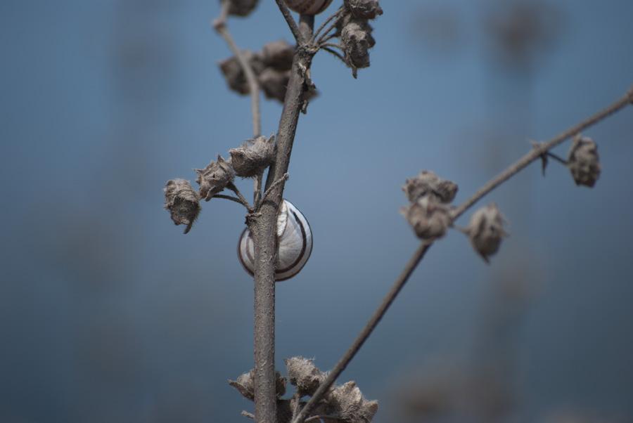 snail behind stem against sky