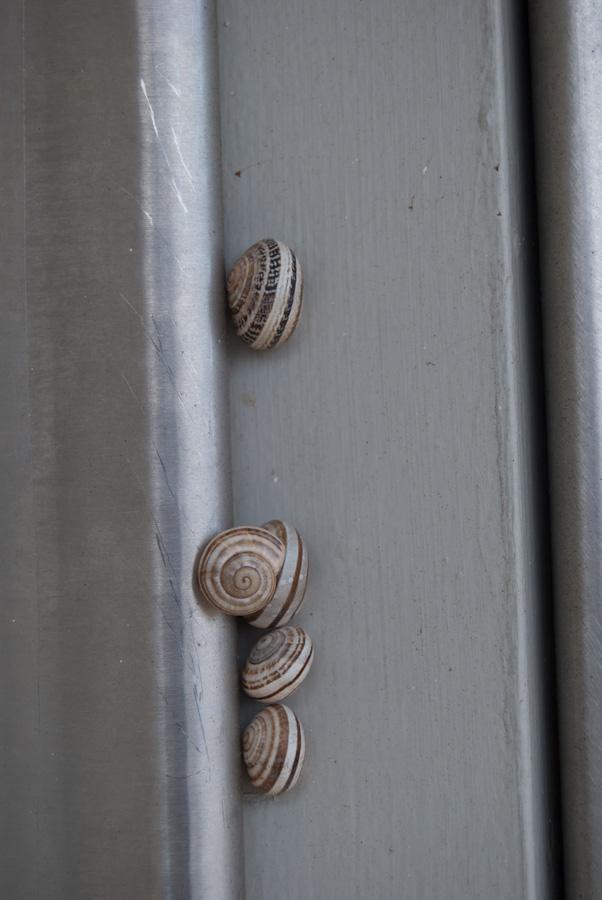 snails on metal