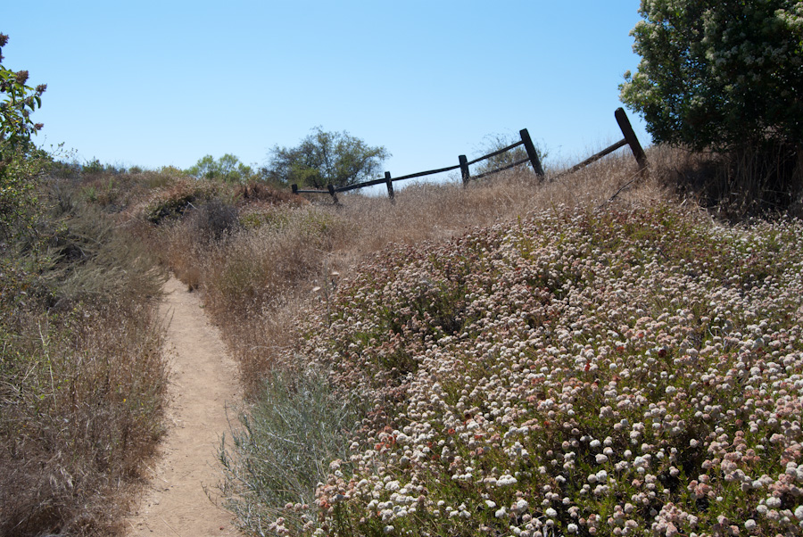 trail past flowers and rail fence