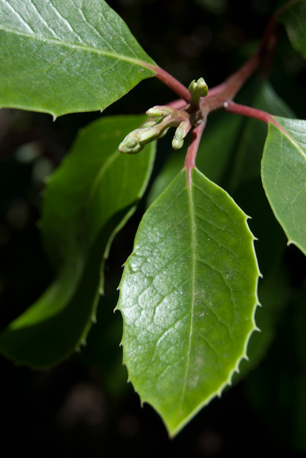 green spiny leaves