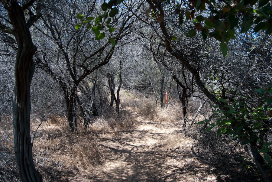 trail under dry branches