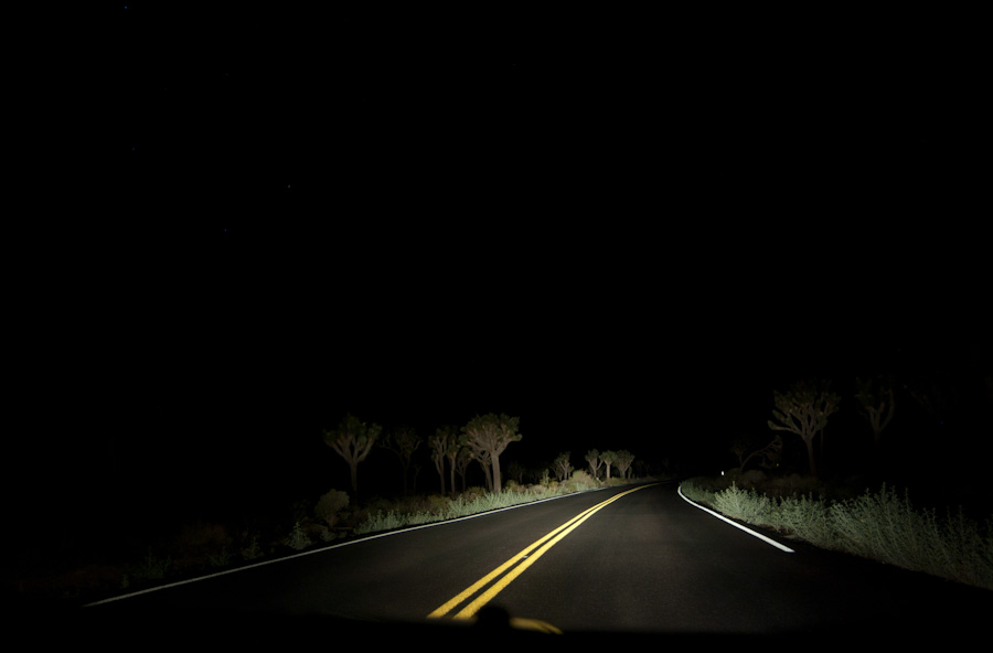 joshua trees and road in headlights