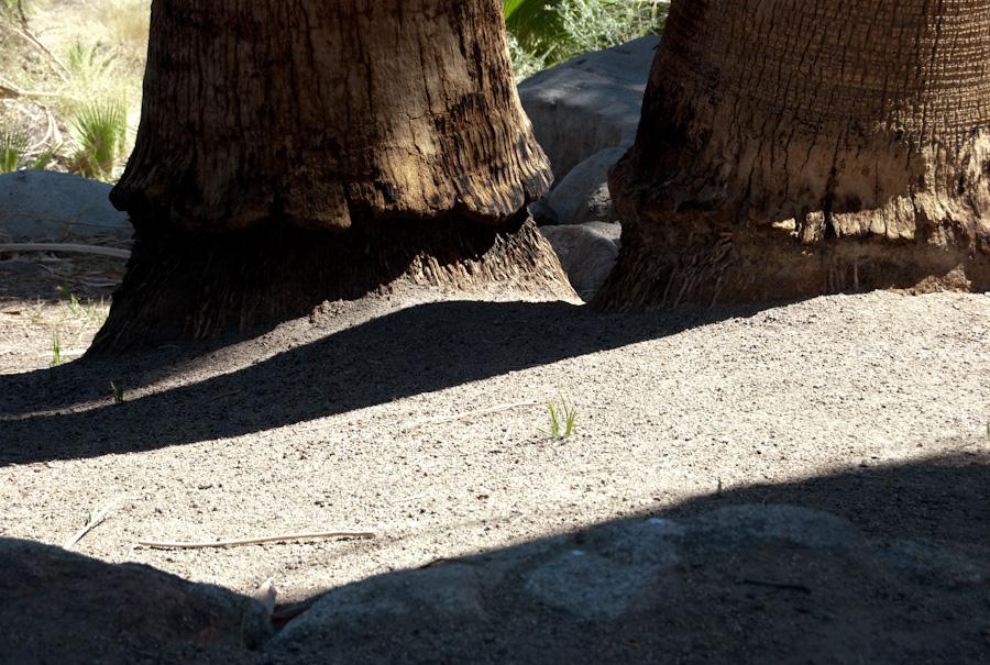 palm tree bases