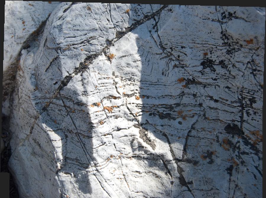 dark and orange lichen on lined rock