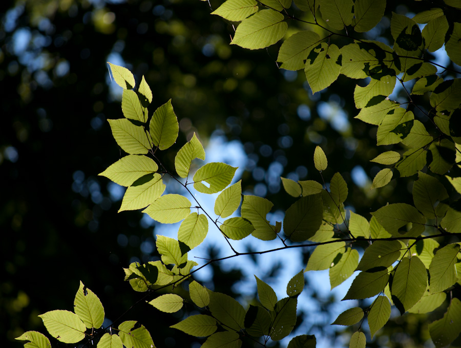 backlit leaves and canopy