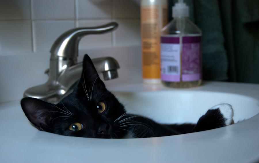 Pepper in sink
