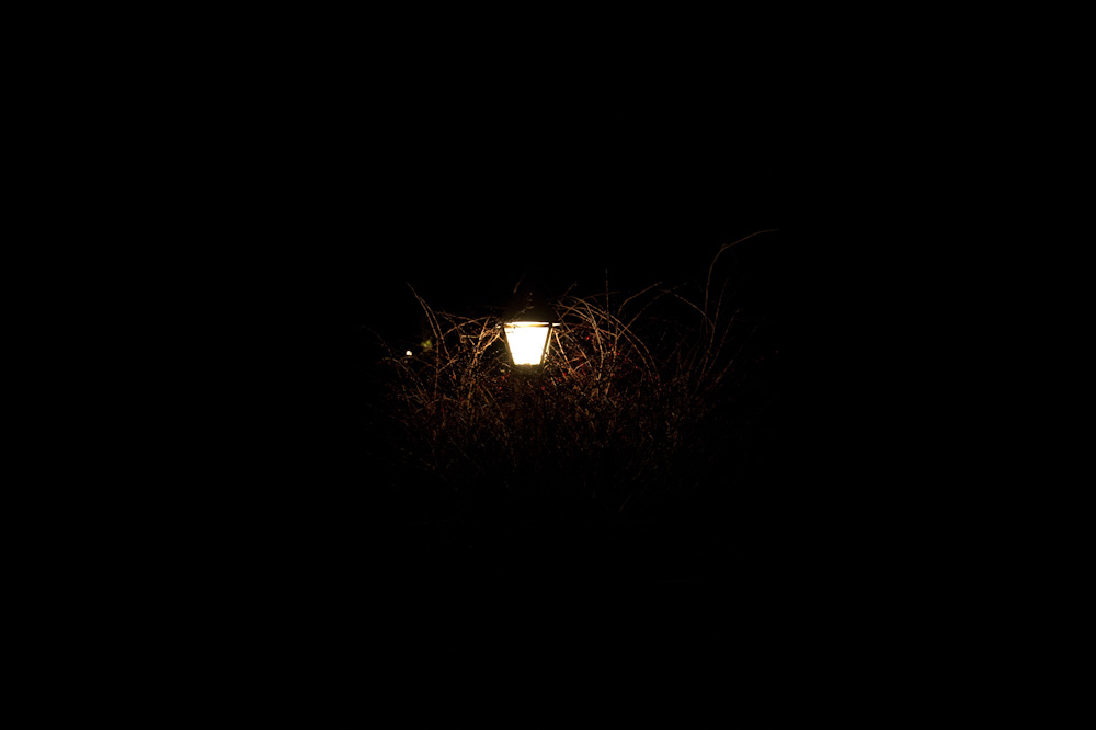 lamp in bush at night