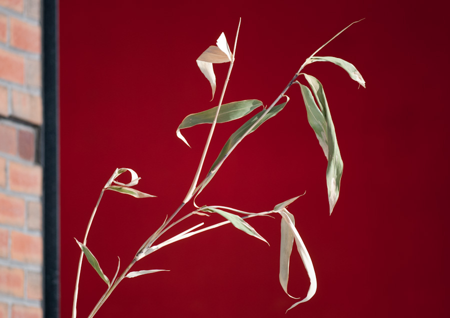 bamboo against red