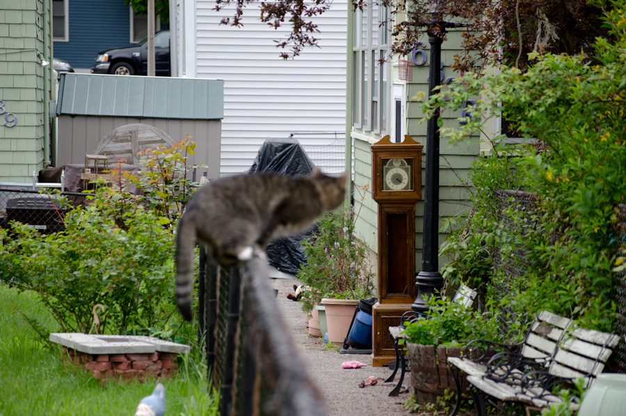cat on fence with clock