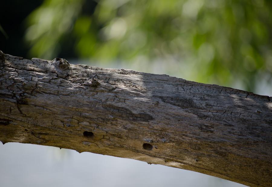 deadwood over water