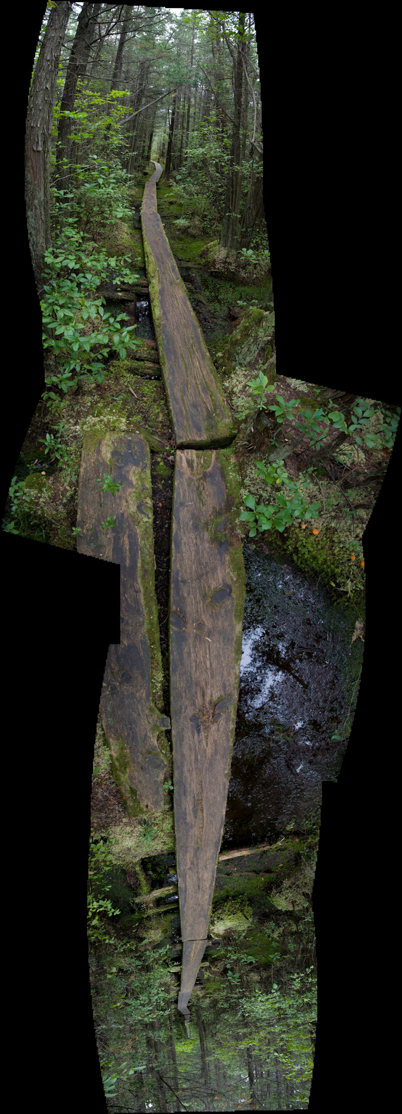 boardwalk through bog, vertical panorama