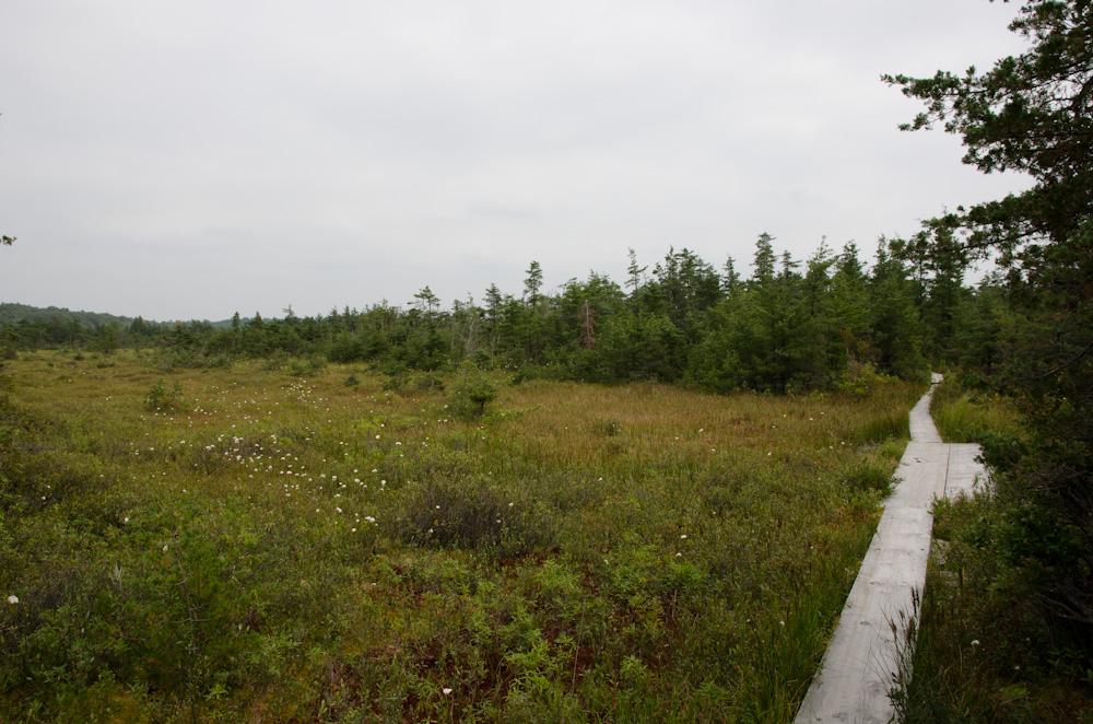boardwalk through clearing