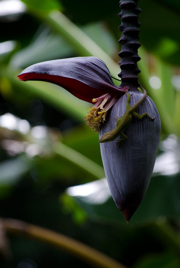 lizard on flower