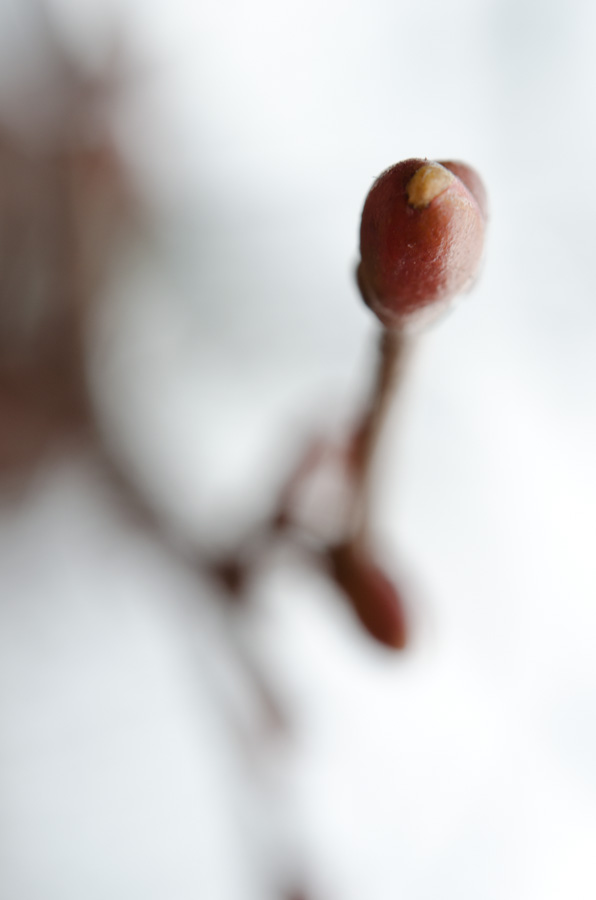 small bud and twig