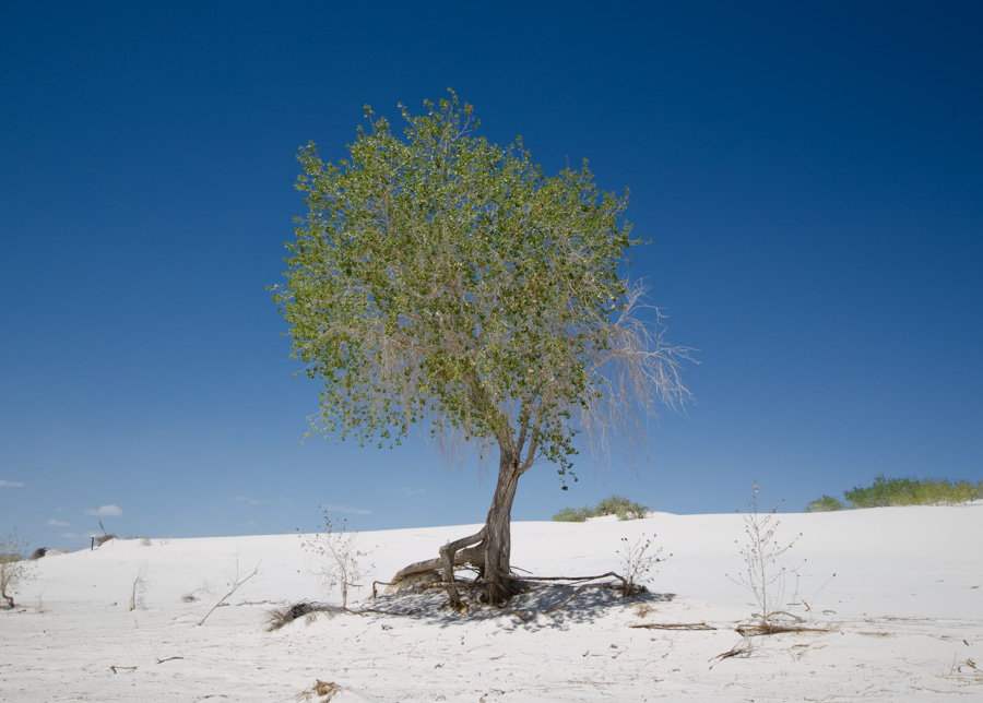 tree in sand, close