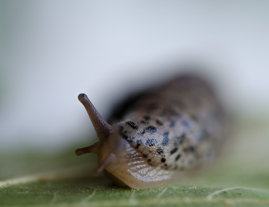 slug with stalks turned