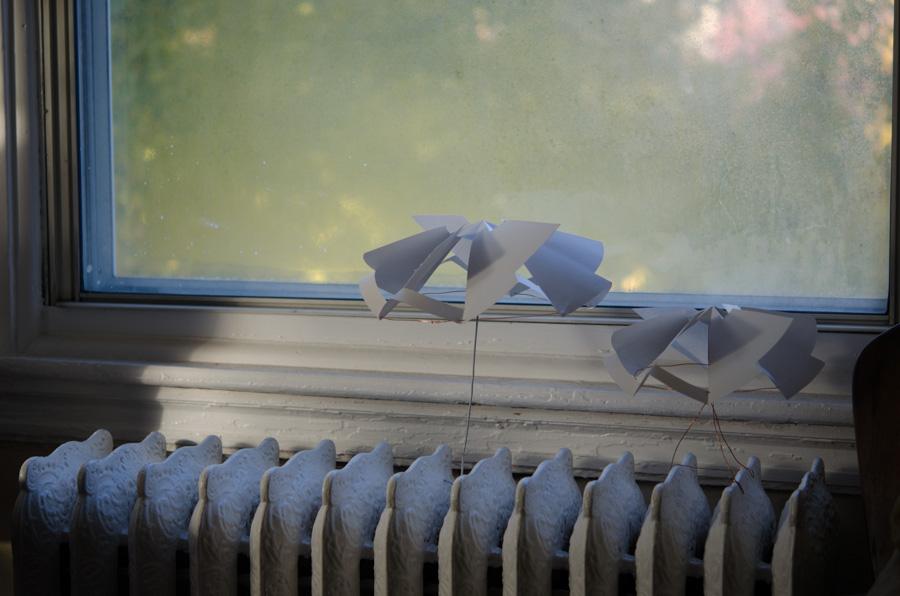 pair in window
