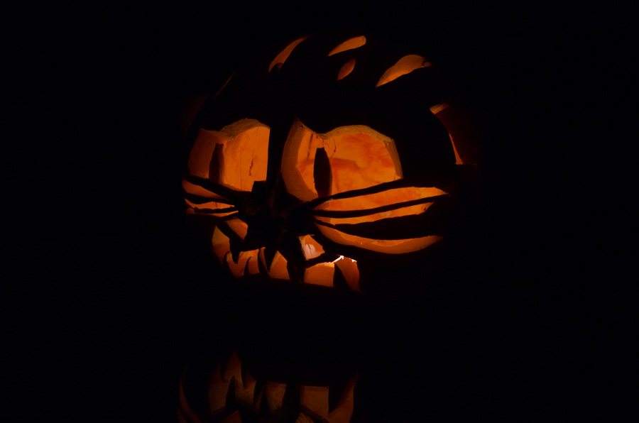 cat jack-o-lantern, lit from interior