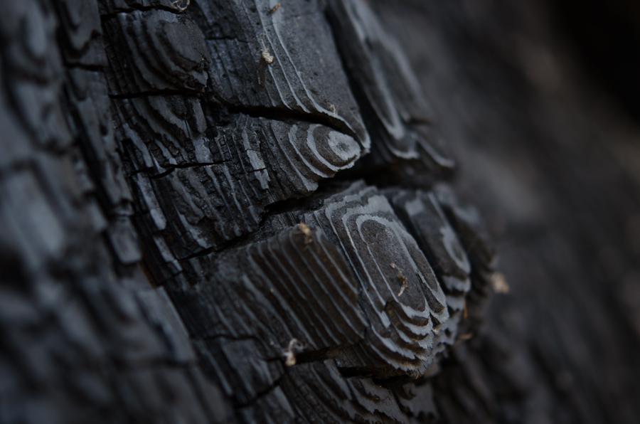 burned bark detail