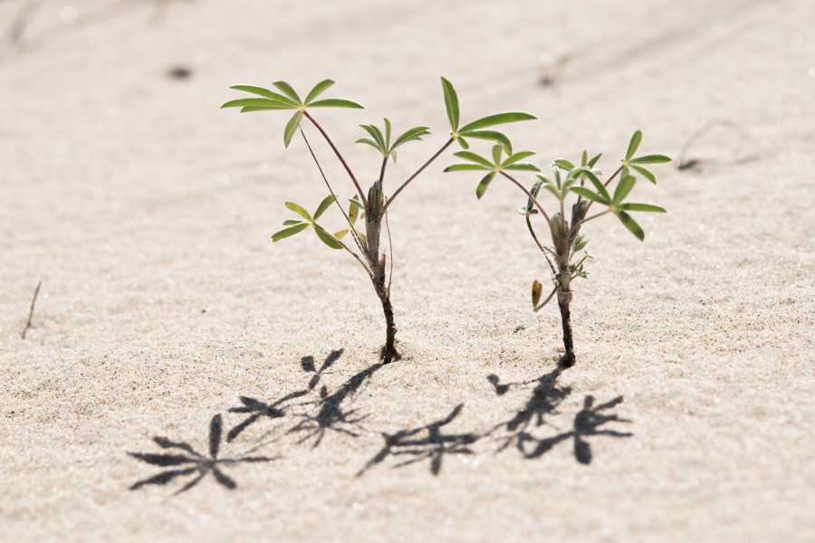 plants in sand